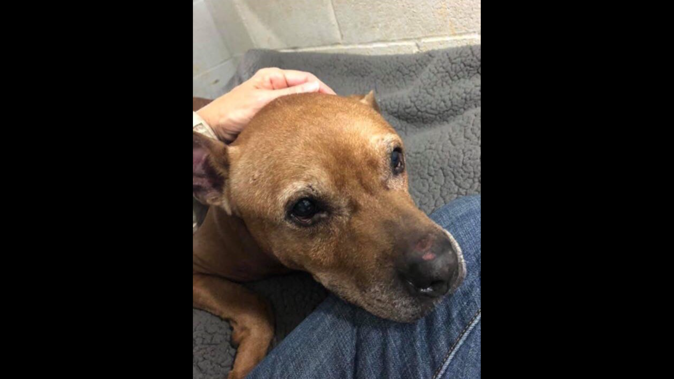 Scared and abandoned senior dog at SPCA in need of a loving