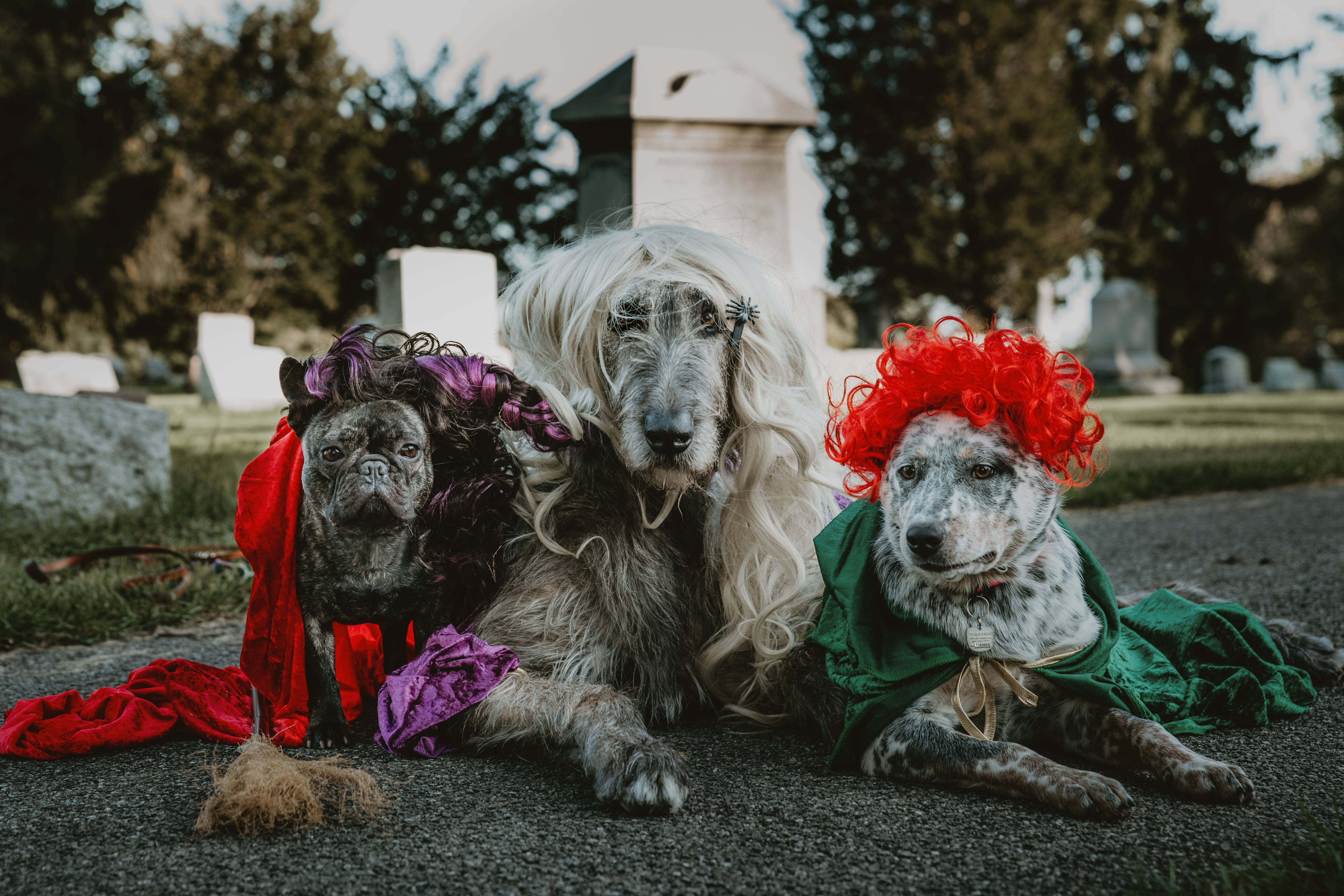 Local photographer gives dogs their own 'Hocus Pocus' photo shoot and the results are amazing