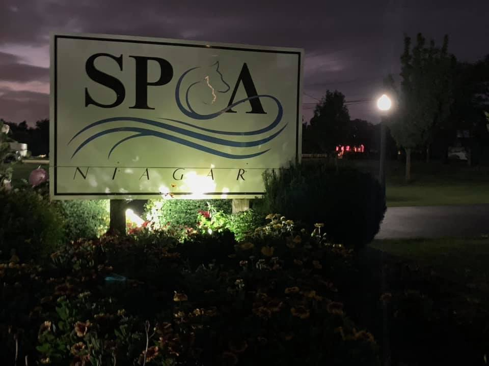 Niagara SPCA announces 15,000 animals saved since becoming no-kill in 2012