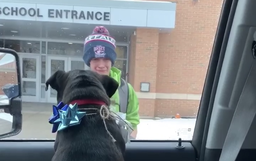 Lost dog surprises her boy at school and his reaction is priceless
