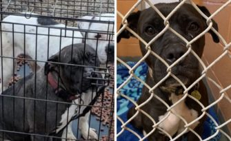Dog left in crate on side of the road still in need of a home