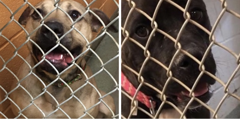 Two shelter dogs keep getting overlooked and no one knows why