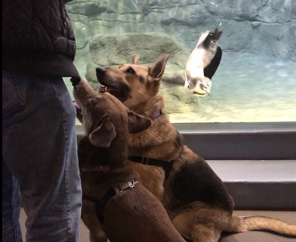 Shelter dogs go on field trip to Aquarium of Niagara