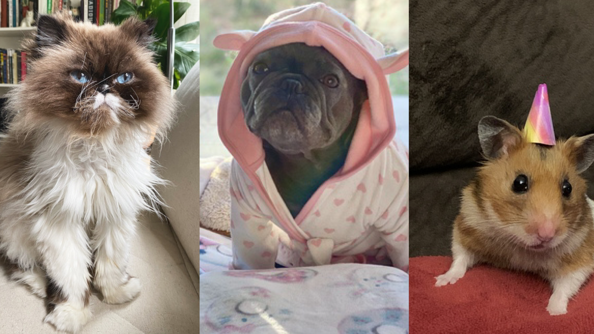 Is your pet the cutest pet in quarantine? Enter them in this contest for a chance to win a prize!