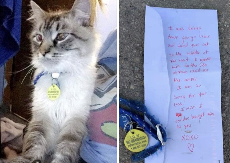 Good Samaritan finds deceased cat in middle of road, returns collar and leaves note for owner