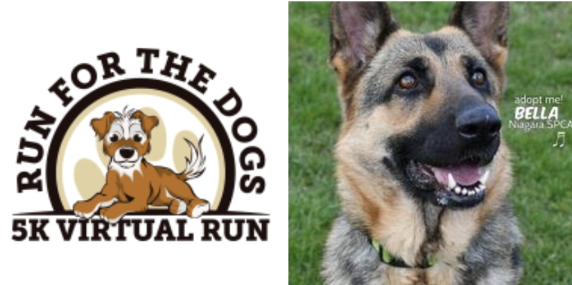 Run for the Dogs 5k Virtual Run to raise funds for shelter dogs across the nation