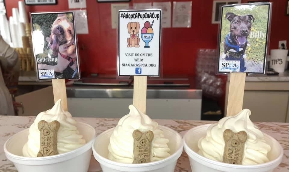 Local ice cream parlor puts shelter dogs in ice cream cups to help them get adopted!