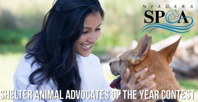 Nominate a 'Shelter Advocate of the Year' and help Niagara County SPCA