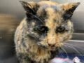 Shelter cat with only a few months to live in need of a 'forever foster home'