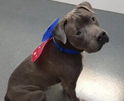 Dog abandoned by family at local pet resort in need of a home