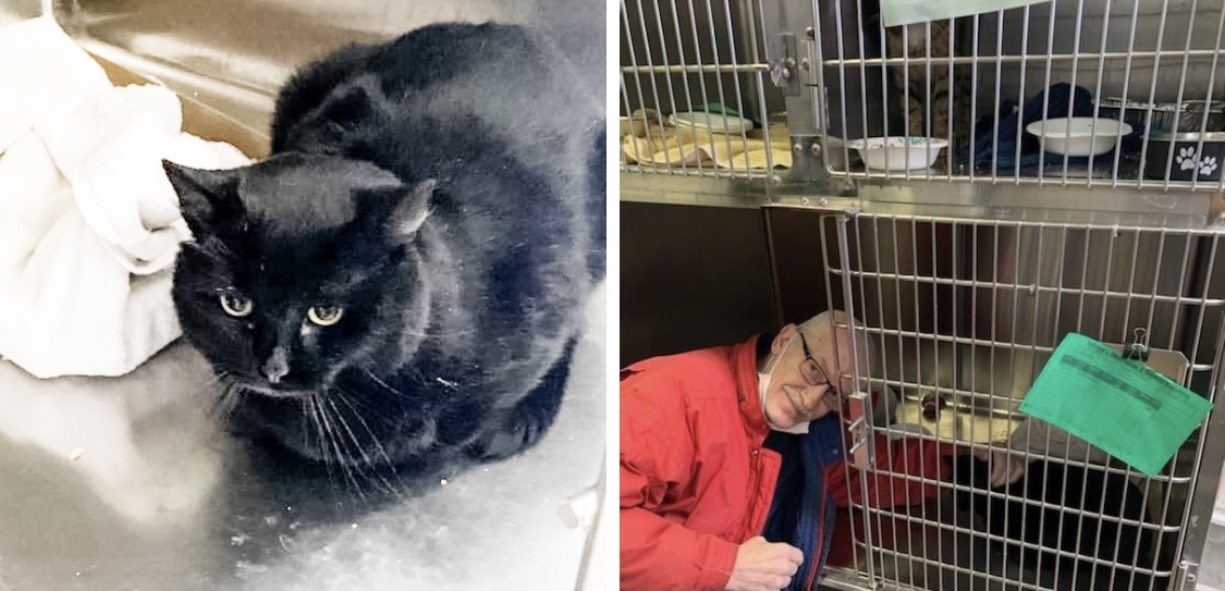 Homeless veteran desperately tries to help homeless cat, one special rescue steps in