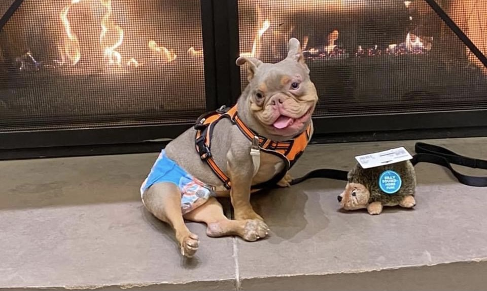 Rescue dog with spina bifida ditched at meet and greet gets lots of love