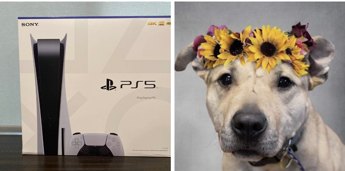 PlayStation 5 being raffled off to help homeless dogs in need