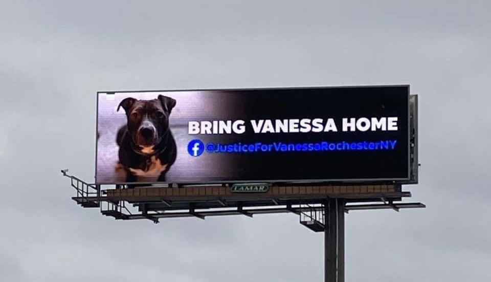 Justice for Vanessa: Community rallying to save dog who may be put down
