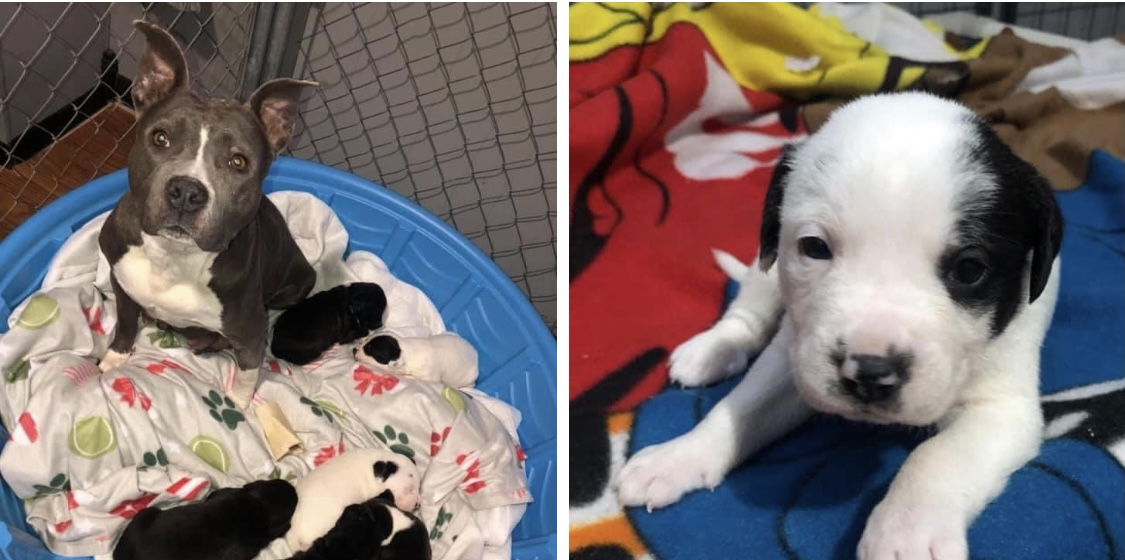 Puppy shower to be held for rescue dog and her puppies, community invited!