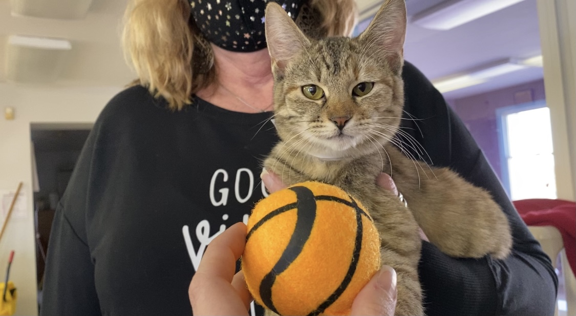 Ten Lives Club only animal rescue in New York in running to win national competition!