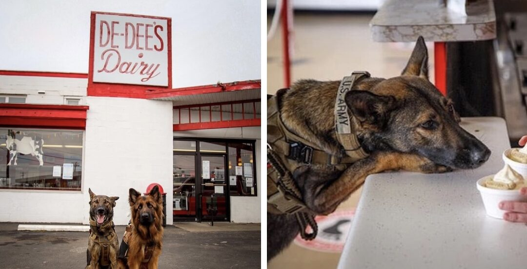 'Pup Cups' at De Dee's Dairy to benefit WNY Heroes dog program