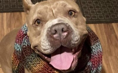 Local rescue searching for immediate foster or forever for sweet dog