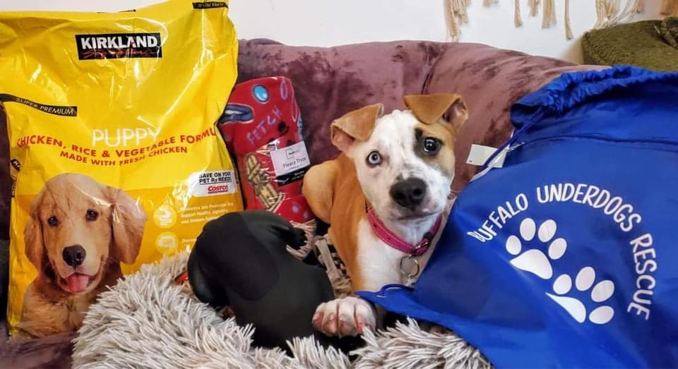 You can buy a rescue dog a 'Welcome to Buffalo' gift set and it's too adorable!