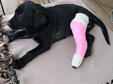 Clyde's Feed & Animal Center helping puppy that was ran over by a car